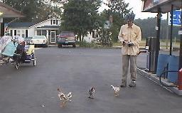 Ben and Chickens