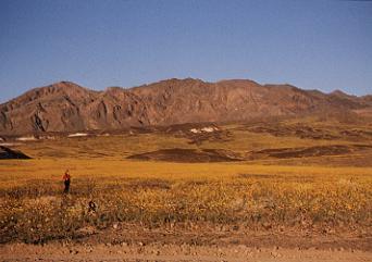The desert blooms